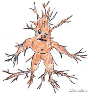 Bludný kořen